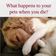 What Happens to your Pets When You Die?