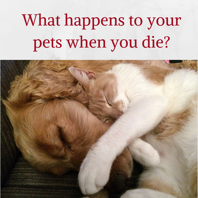 What happens to your pets when you die